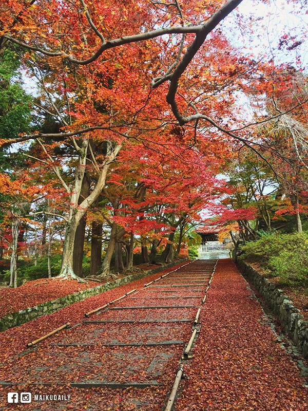 京都紅葉名所 毘沙門堂 紅葉階梯