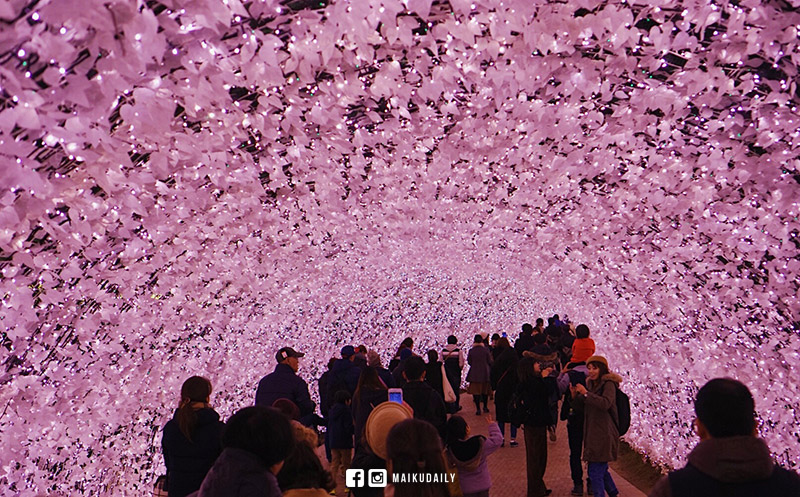 名花之里 日本最大燈海打卡位 行程&交通攻略