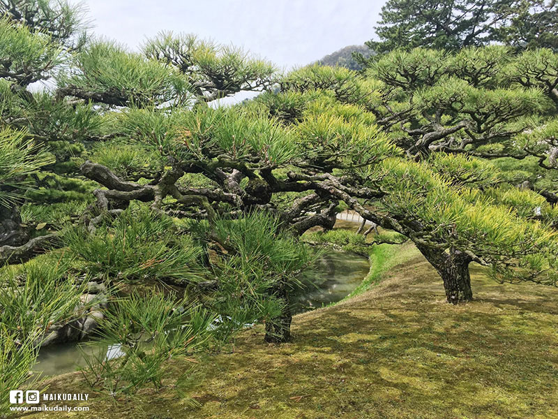特別名勝栗林公園 日本庭園