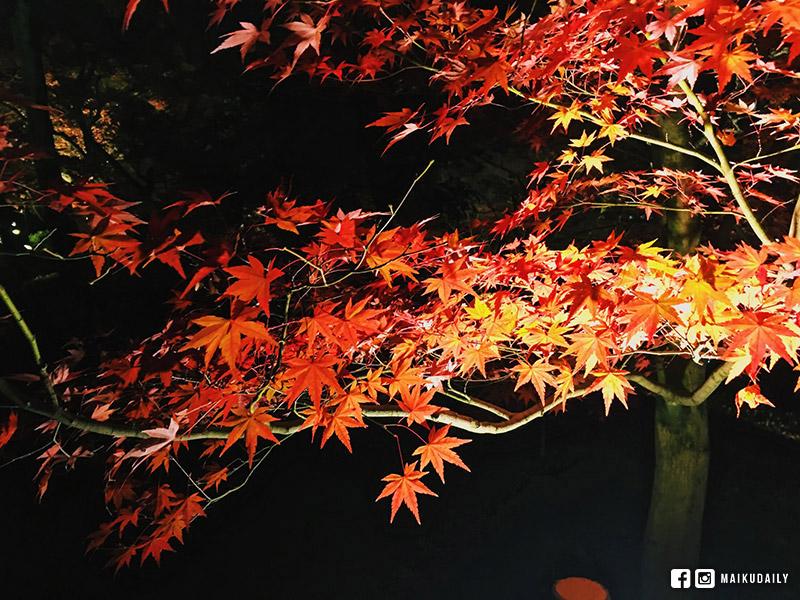永觀堂 禪林寺 京都 紅葉 賞楓 夜楓