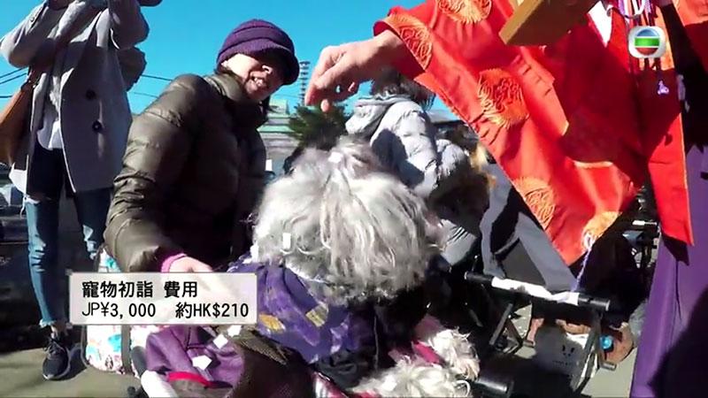 無綫《周遊東京》周奕瑋 寵物祈福 市谷亀岡八幡宮