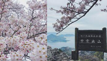 紫雲出山 香川縣 賞櫻景點 瀨戶內海絕景