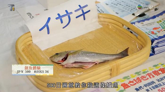 森美旅行團 京都市中央卸売市場 每月限定 食彩日 買海鮮 劏魚見學