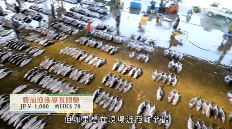 和歌山 勝浦漁港 魚市場 吞拿魚聖地