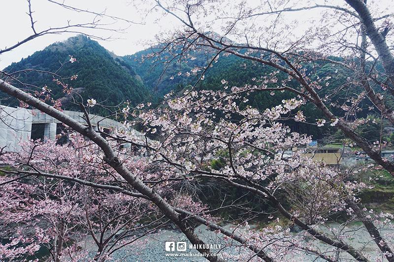 大步危住宿 民宿 德島 空音遊 自然菜食