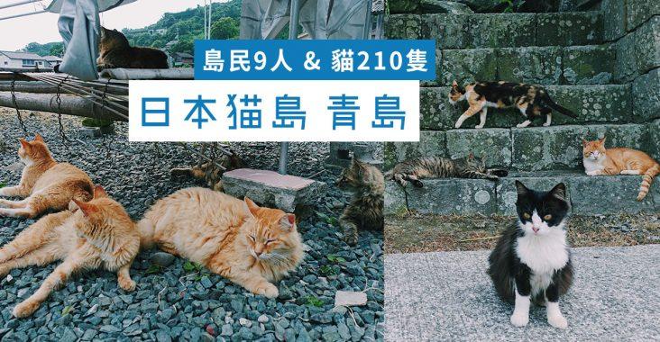 青島 日本貓島 愛媛縣 大洲