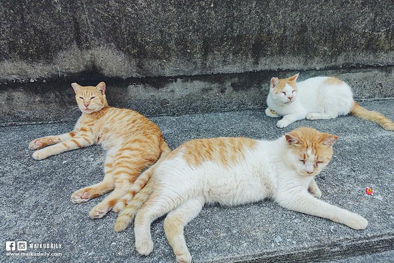 男木島 瀨戶內海跳島遊 香川縣 貓島