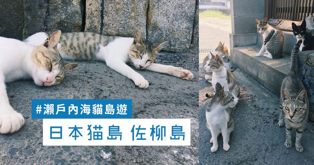 佐柳島 日本貓島 香川縣 多度津 瀨戶內海