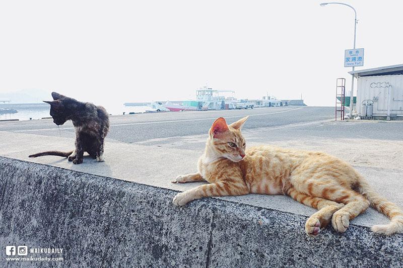 豐島 瀨戶內海藝術祭 跳島遊 香川縣 貓