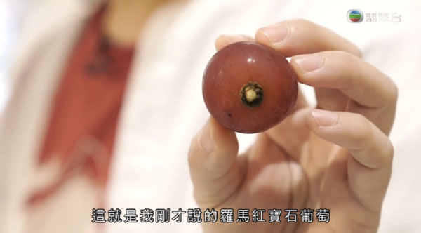 周遊東京 六本木 東京 Midtown Sun Fruits Ruby Roman 高級葡萄