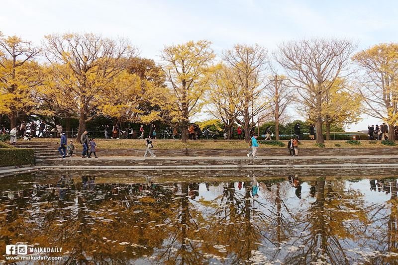國營昭和紀念公園 銀杏