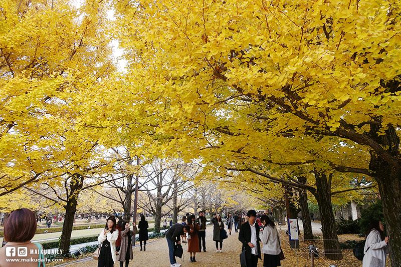 國營昭和紀念公園 銀杏大道
