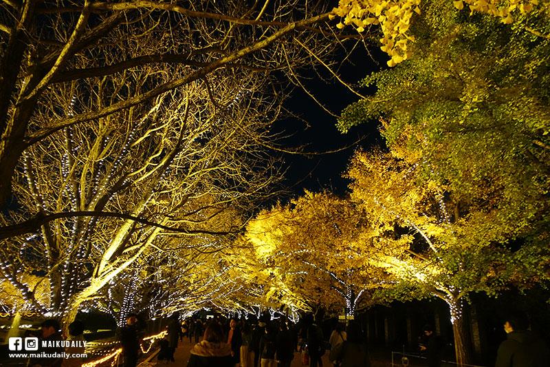 國營昭和紀念公園 銀杏點燈 夜楓