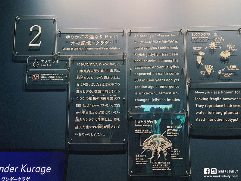 墨田水族館 水母