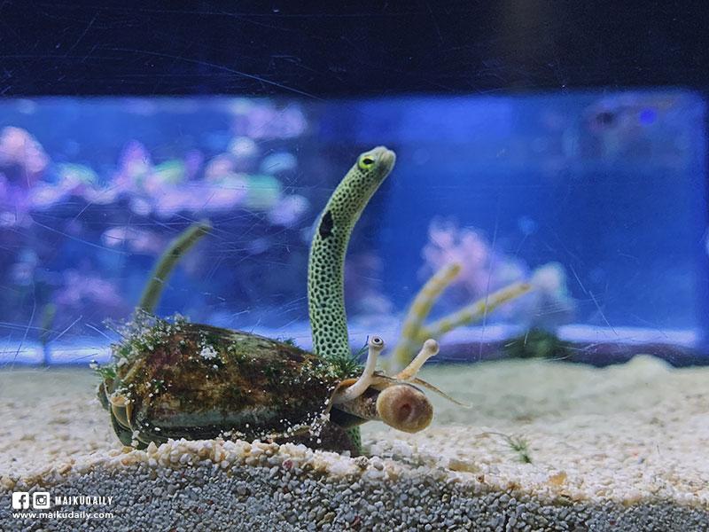 墨田水族館 花園鰻