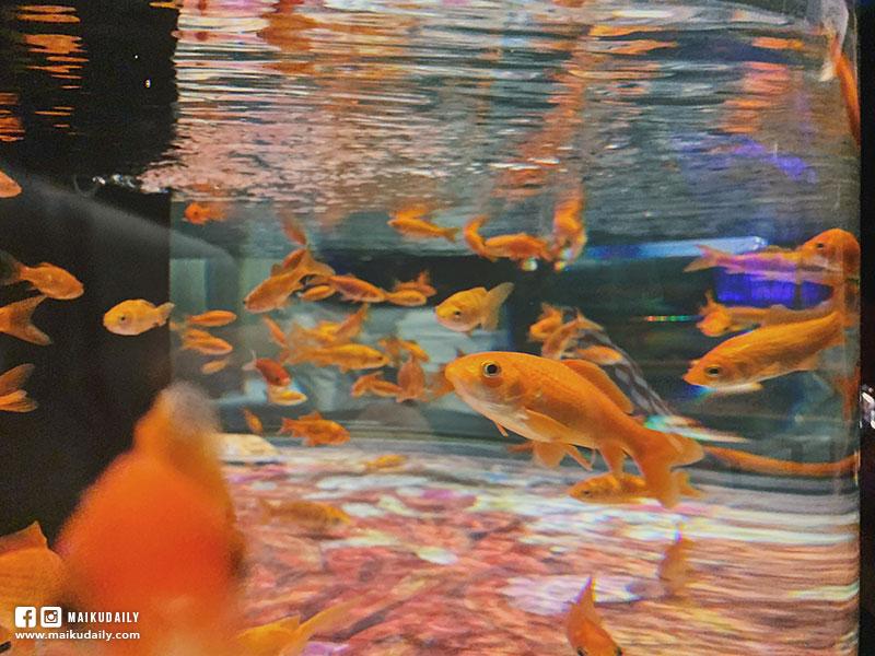 墨田水族館 金魚